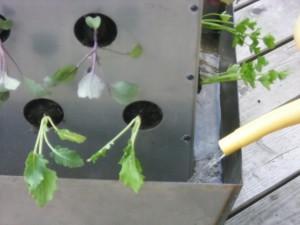 Bewässerung Balkonplfanzen