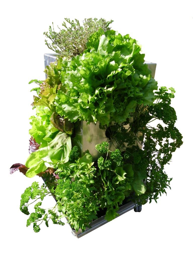 Mini Garten, Minigarten Gemüse