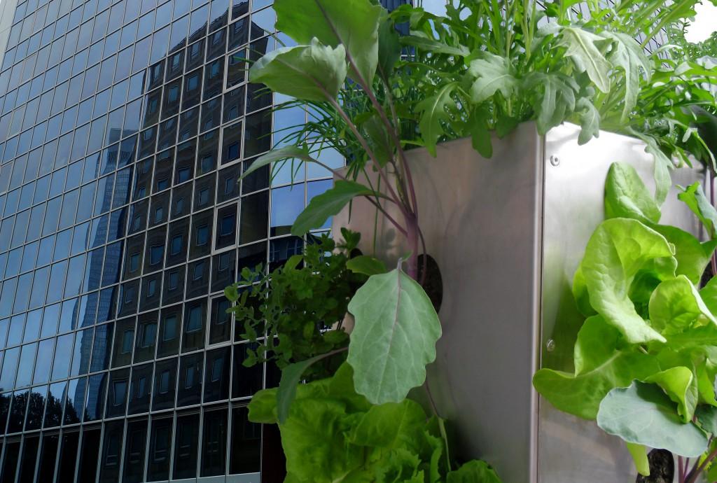 Urban gardening, Stadt gärtnern