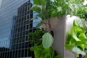Maag Design - Urban Gardening Balkon