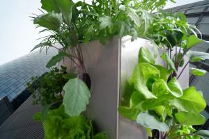 KUBI Balkon Gemüseanbau