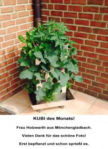 2015-05 KUBI des Monats Holzwarth Mönchengladbach