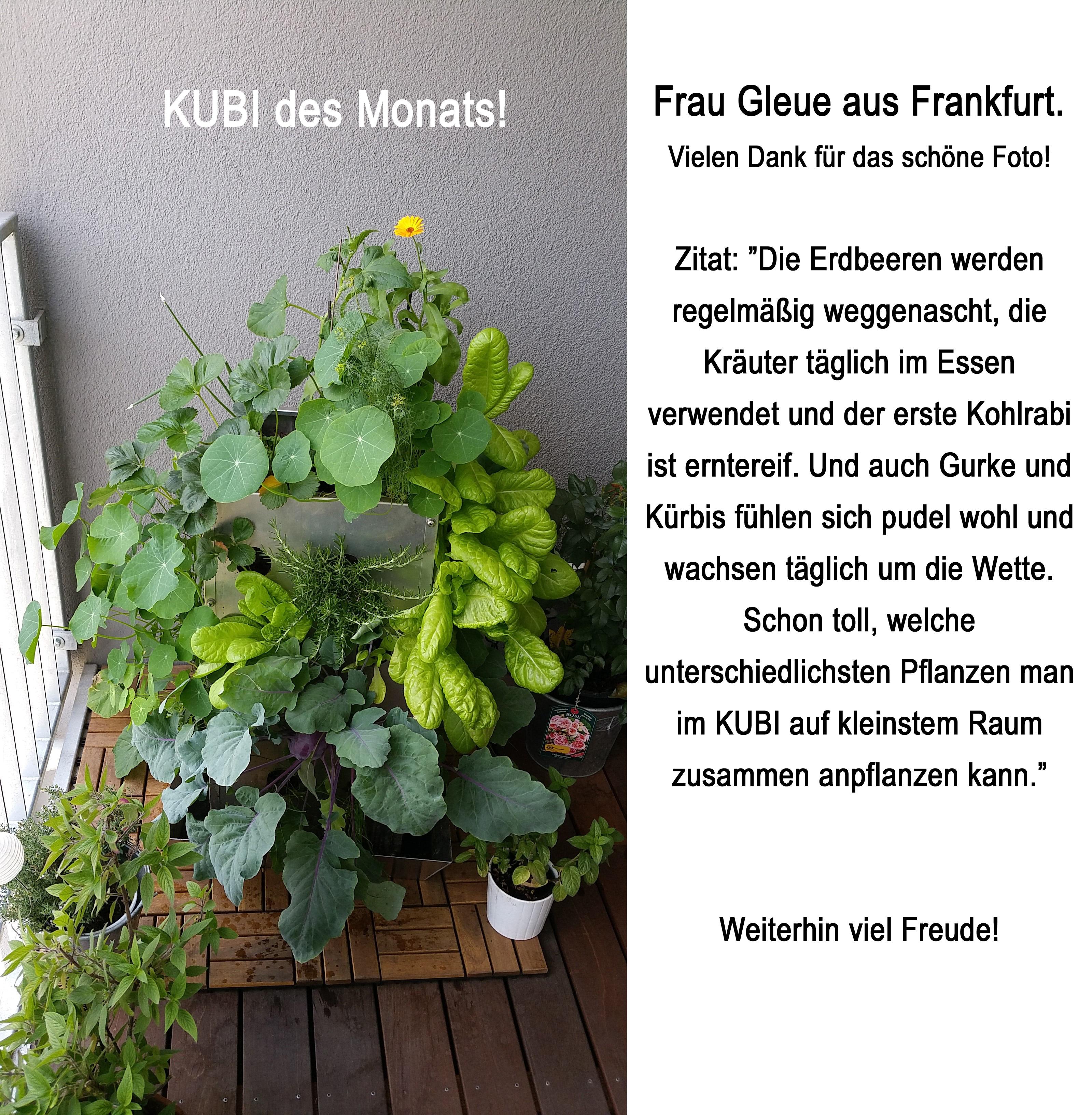 2015-06 KUBI des Monats Gleue Frankfurt