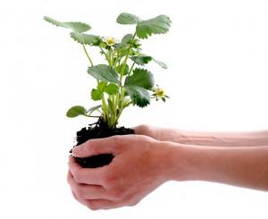 KUBI bepflanzen 2