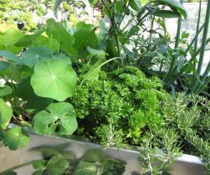 Gemüse und Kräuter auf dem Balkon - KUBI