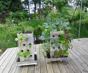 KUBI Pflanzenwachstum auf der Terrasse