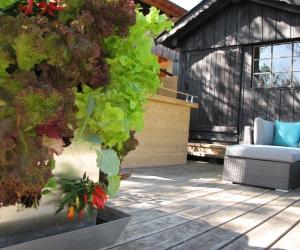 KUBI auf der Terrasse