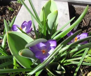 KUBI im Frühling