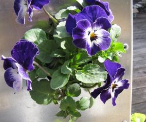 KUBI bepflanzung Blumen vertikal
