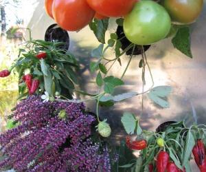 Vertical gardening KUBI