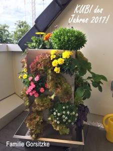 2017 KUBI des Jahres