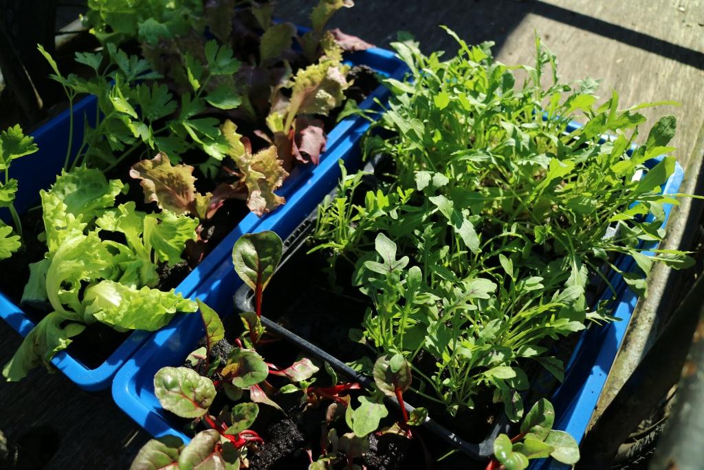 Gemüse auf Balkon anbauen im vertikalen Hochbeet