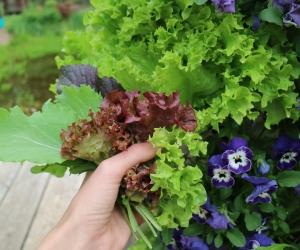 Salat leicht vertikal anbauen