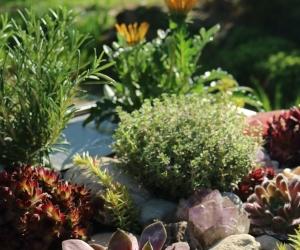 KUBI Steingarten mit Kräutern und Gemüse